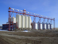 Livestock feeding operation near Lethbridge Alberta