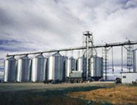 Bar None Ranch grain handling